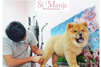 [Basic OR Full Grooming for Pets @ up to 35% Savings!] Pets Grooming Session Starting from $10.50. Check the measurement under Deal write up before buying. Pay $10 at SocialDeal and remaining at Si Manja. Redemption at Si Manja Pet Grooming Spa, Serusop.